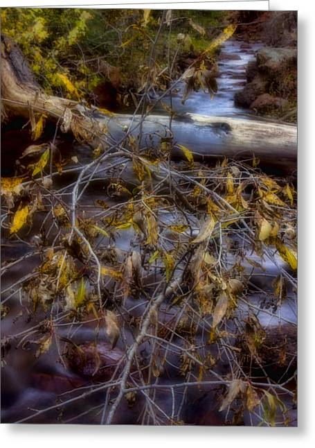 Beautiful Creek Digital Greeting Cards - Autumn At Eight Mile Creek Greeting Card by Ellen Heaverlo