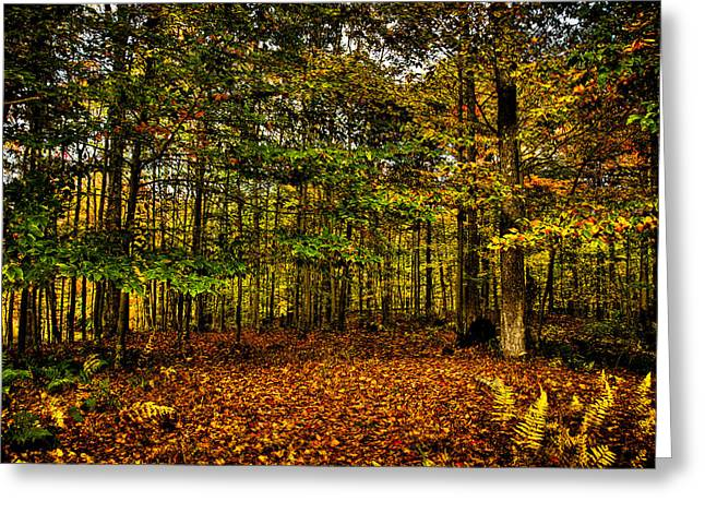 Hdr Landscape Greeting Cards - Autumn at McCauley Mountain II Greeting Card by David Patterson