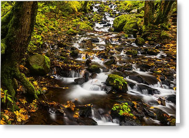 Starvation Greeting Cards - Autumn at Starvation Creek in Columbia River Gorge Greeting Card by Vishwanath Bhat