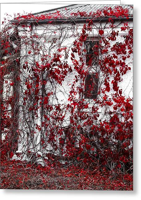 Harding Greeting Cards - Autumn at the old hospital Greeting Card by Constance Fein Harding