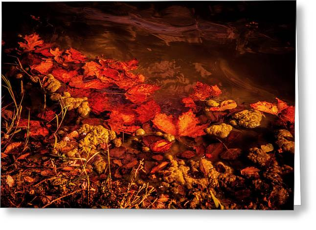 Still Life Photographs Greeting Cards - Autumn at the pond Greeting Card by Toni Hopper