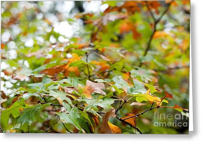 Autumn Greeting Card by Barbara Shallue