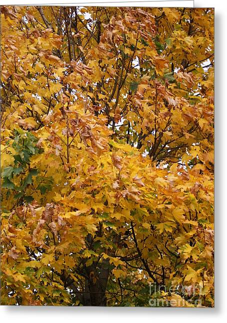 Turning Leaves Greeting Cards - Autumn Beauty 2 Greeting Card by Carol Lynch