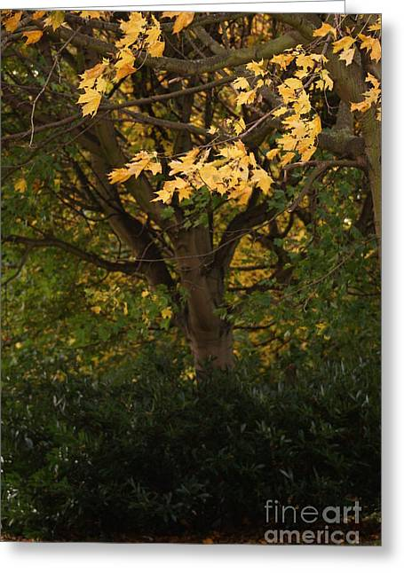 Turning Leaves Greeting Cards - Autumn Beauty 7 Greeting Card by Carol Lynch