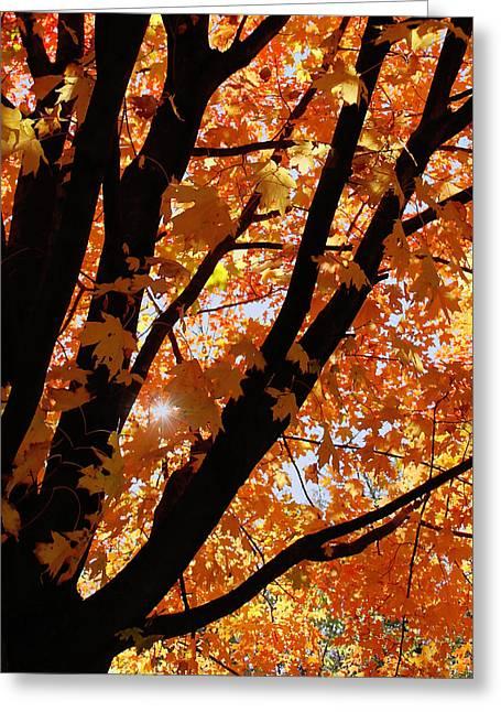 Kim Photographs Greeting Cards - Autumn Beauty Greeting Card by Kim Hojnacki
