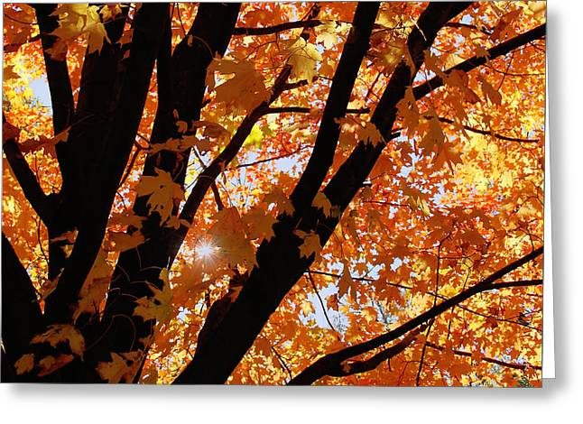Autumn Beauty Greeting Card by Kim Hojnacki