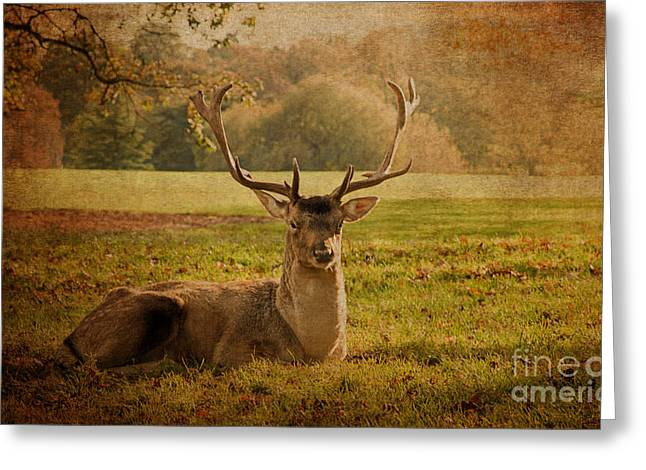 Shabbychic Greeting Cards - Autumnal Beauty. Greeting Card by ShabbyChic fine art Photography