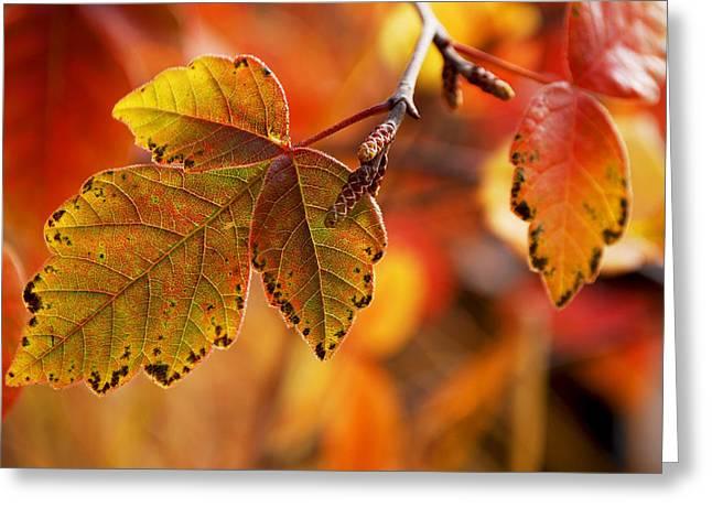 Becky Furgason Greeting Cards - #autumn Greeting Card by Becky Furgason