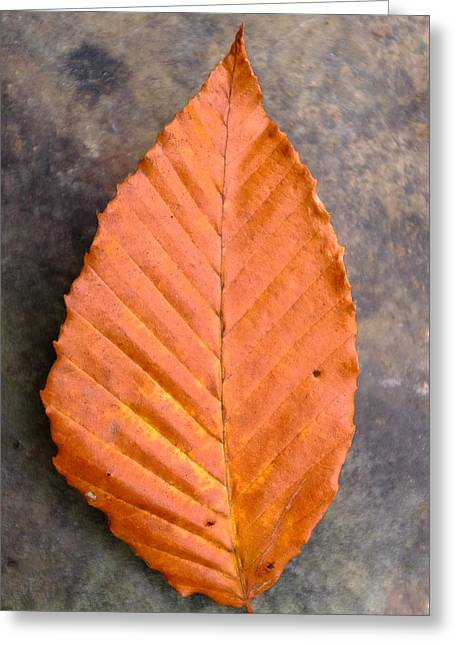 Turning Leaves Greeting Cards - Autumn Beech Leaf on Stone Four Greeting Card by Chris Bordeleau