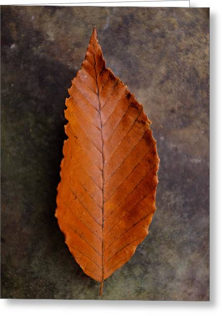 Turning Leaves Greeting Cards - Autumn Beech Leaf on Stone One Greeting Card by Chris Bordeleau