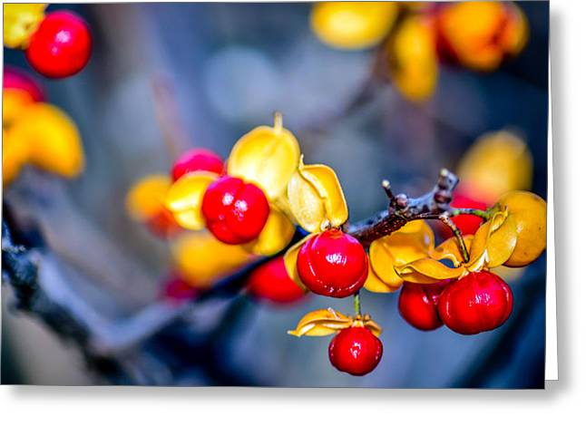 Auburn Ma Greeting Cards - Autumn Berries Close Up Greeting Card by Black Brook Photography