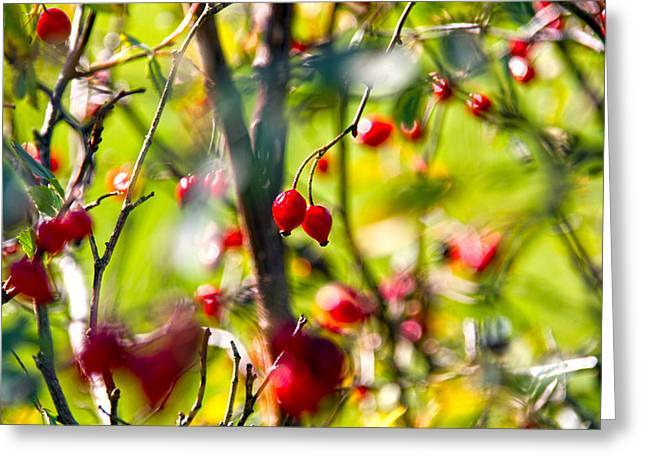 Berry Greeting Cards - Autumn Berries  Greeting Card by Stylianos Kleanthous
