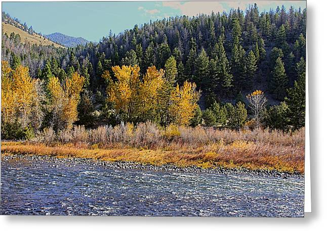 Fir Trees Greeting Cards - Rippling Big Hole River Montana Greeting Card by Jennie Marie Schell