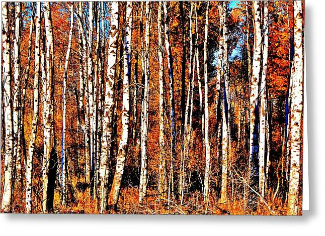 Birch Tree Greeting Cards - Autumn Birch Greeting Card by Benjamin Yeager