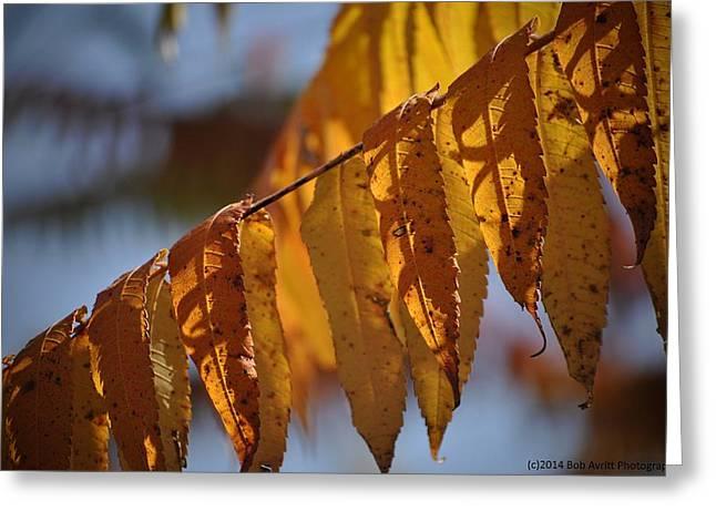 Indiana Autumn Greeting Cards - Autumn Blaze Greeting Card by Bob Avritt
