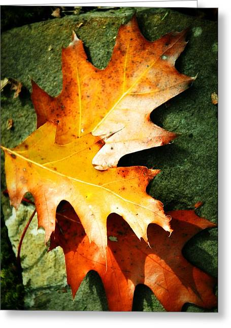Red Fallen Leave Greeting Cards - Autumn Blaze Greeting Card by JAMART Photography