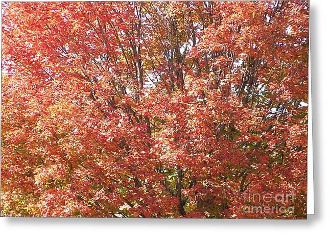 Kevin Croitz Greeting Cards - Autumn Blaze Greeting Card by Kevin Croitz