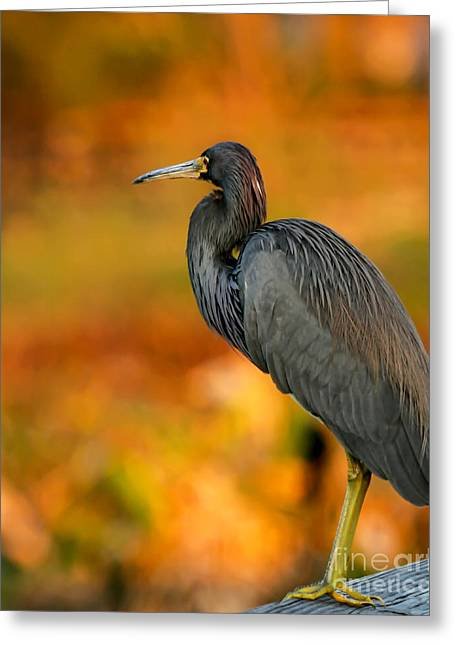 Green Cay Greeting Cards - Autumn Blue Heron Greeting Card by Sabrina L Ryan