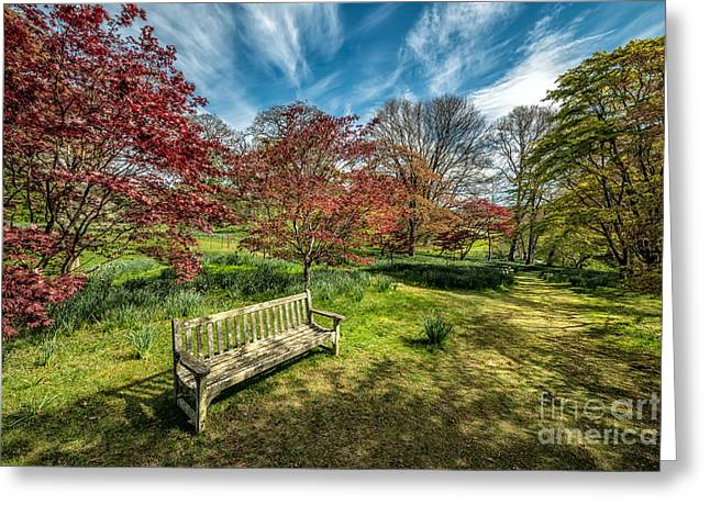 Acer Greeting Cards - Autumn Break Greeting Card by Adrian Evans