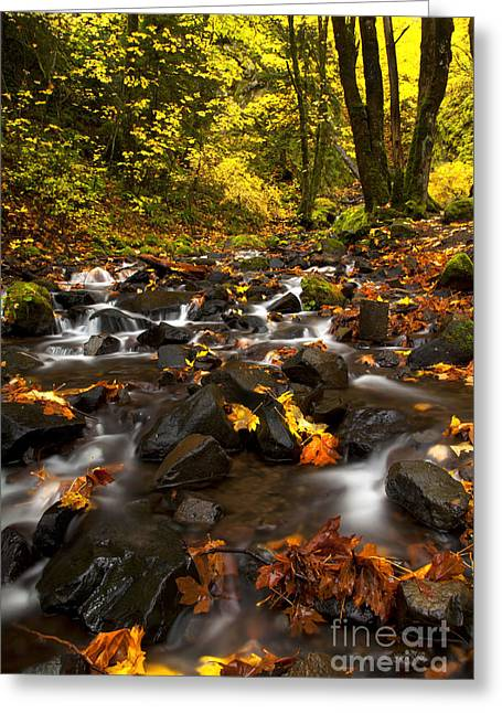Stream Greeting Cards - Autumn Breeze Greeting Card by Mike  Dawson