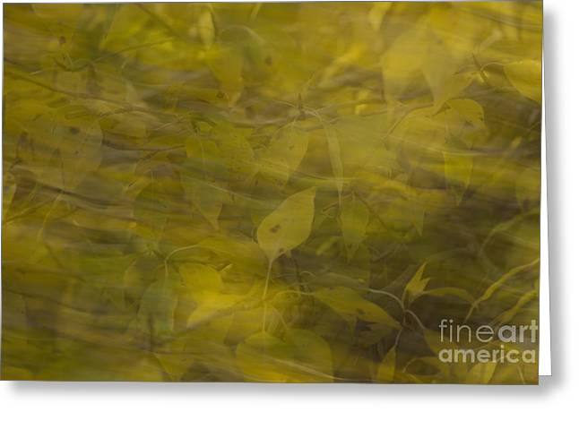 Yellow Leaves Pastels Greeting Cards - Autumn Breeze Greeting Card by Nena Trapp