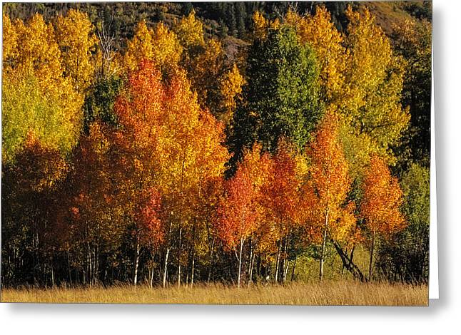 Scenic Drive Greeting Cards - Autumn Brillance Greeting Card by Teri Virbickis