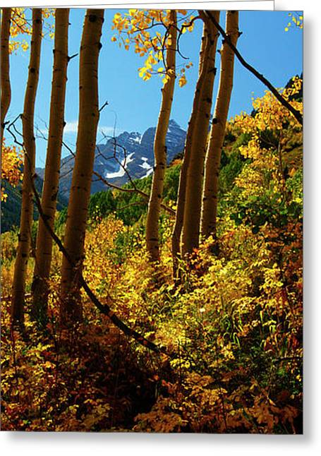 Jeremy Greeting Cards - Autumn Brilliance 2 Greeting Card by Jeremy Rhoades