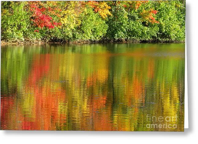 Autumn Brilliance Greeting Card by Ann Horn
