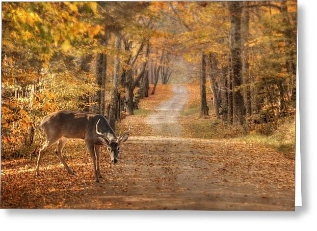 Rack Greeting Cards - Autumn Buck Greeting Card by Lori Deiter
