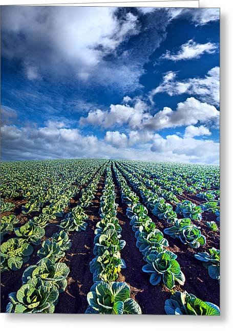 Cabbages Greeting Cards - Autumn Cabbage Greeting Card by Phil Koch
