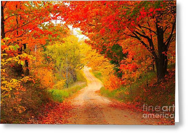 Fallen Leaves Greeting Cards - Autumn Cameo Road Greeting Card by Terri Gostola