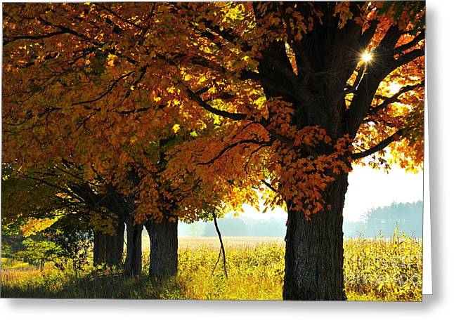 Sun Greeting Cards - Autumn Canopy 2 Greeting Card by Terri Gostola