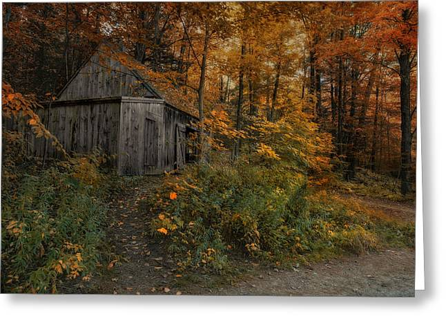 Recently Sold -  - Shed Greeting Cards - Autumn Canopy Greeting Card by Robin-lee Vieira