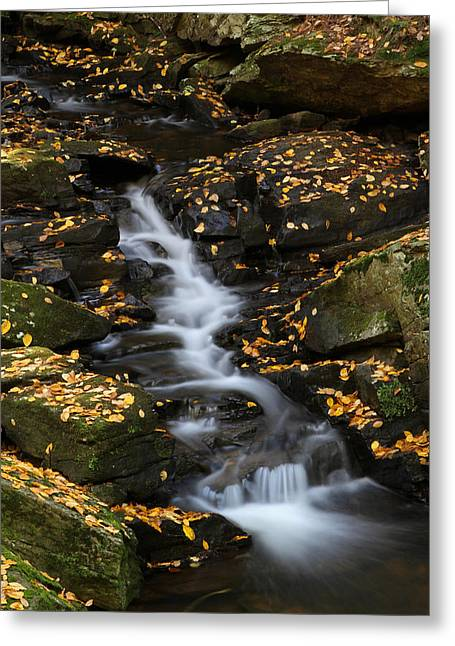 Beautiful Creek Photographs Greeting Cards - Autumn Cascade at Chesterfield Gorge - New Hampshire Greeting Card by Juergen Roth