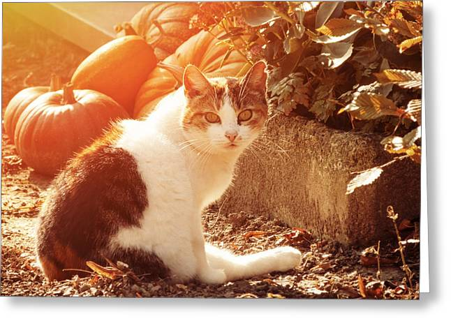 Fall Photos Greeting Cards - Autumn Cat Greeting Card by Wim Lanclus