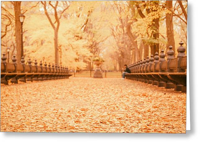 Central Park Photo Greeting Cards - Autumn - Central Park Elm Trees - New York City Greeting Card by Vivienne Gucwa