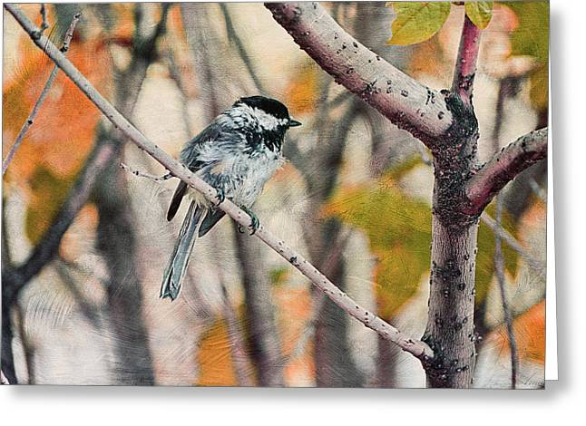 Bird On Tree Greeting Cards - Autumn Chickadee  Greeting Card by Maria Angelica Maira