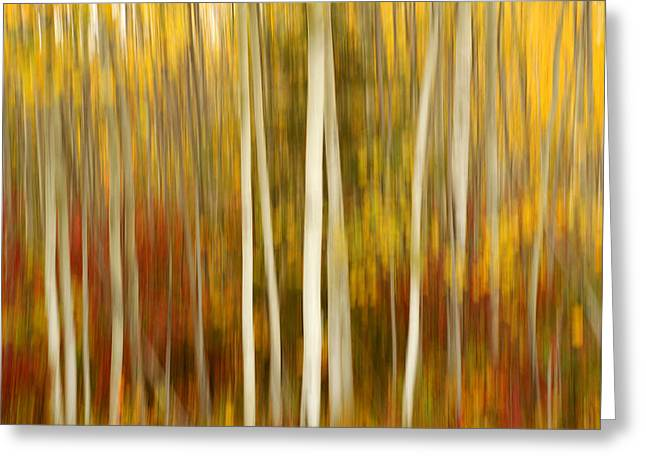 Colors Of Autumn Greeting Cards - Autumn Chorus Greeting Card by Bill Morgenstern
