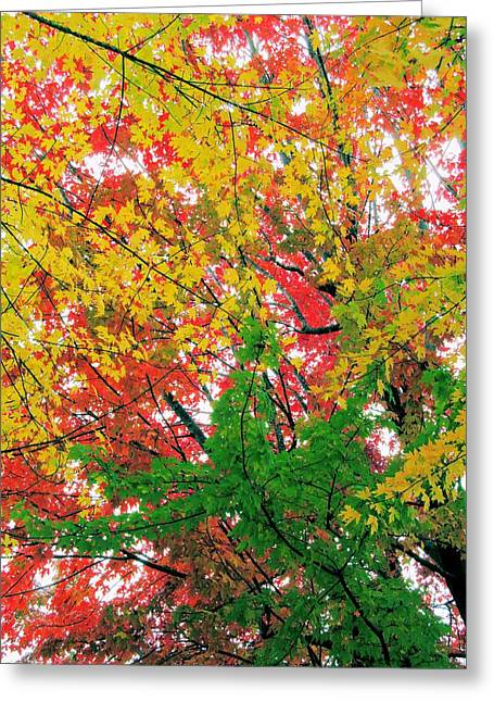 Indiana Autumn Greeting Cards - Autumn Color 3 Greeting Card by Maria Huntley