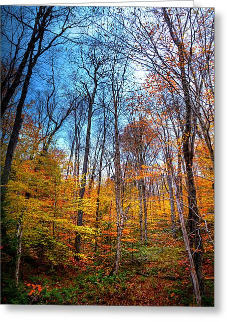Autumn Color Along Green Bridge Road Greeting Card by David Patterson