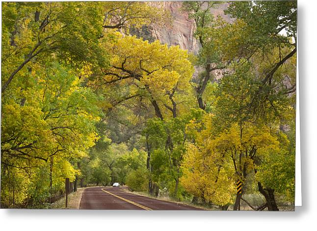 Scenic Drive Digital Greeting Cards - Autumn Color along Zion Canyon Scenic Drive in Zion NP-UT Greeting Card by Ruth Hager