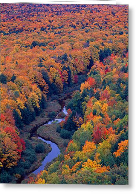 Plantlife Greeting Cards - Autumn Color At Porcupine State Park Greeting Card by Panoramic Images