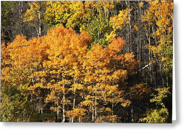 Autumn Scenes Greeting Cards - Autumn Color at the Continental Divide Greeting Card by Kae Cheatham