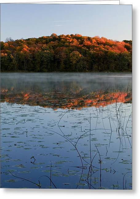 Transitions Greeting Cards - Autumn Color Forest Reflected In Grass Greeting Card by Panoramic Images