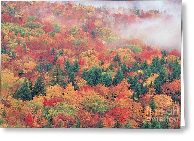 Trees In Autumn Greeting Cards - Autumn Color Greeting Card by George Ranalli