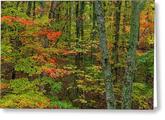 Autumn Color In Brown County State Greeting Card by Chuck Haney