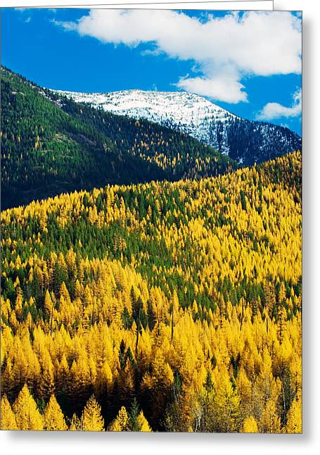 Mountaintop. Trees Greeting Cards - Autumn Color Larch Trees In Pine Tree Greeting Card by Panoramic Images