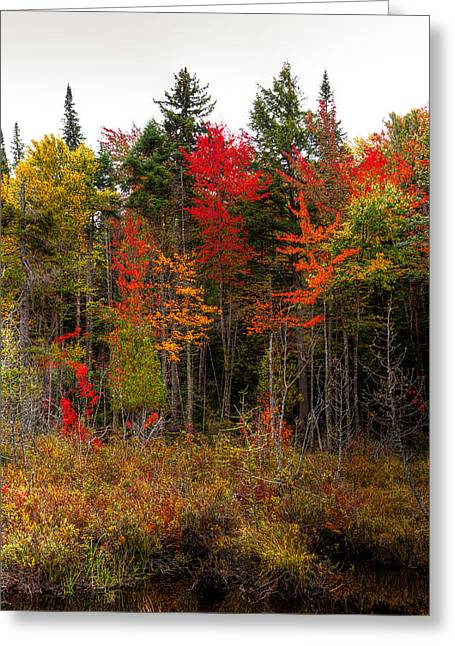 Tract Greeting Cards - Autumn Color near Raquette Lake Greeting Card by David Patterson