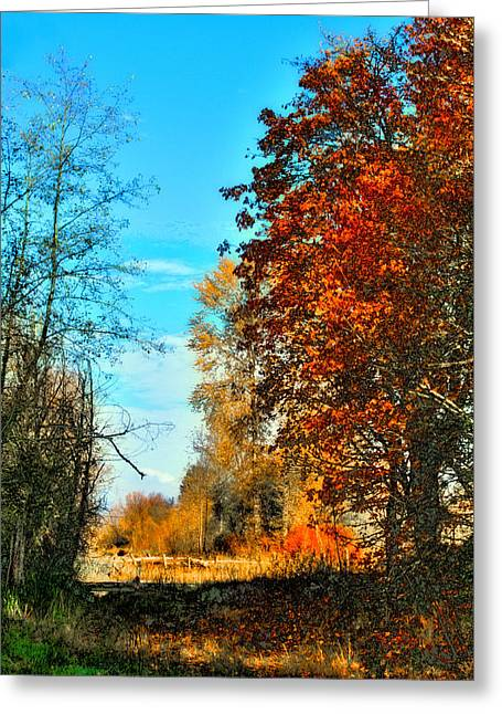 Wildlife Refuge. Greeting Cards - Autumn Color - Nisqually Wildlife Refuge Greeting Card by David Patterson