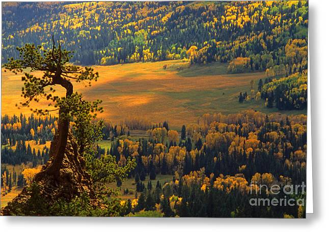 Wolf Creek Photographs Greeting Cards - Autumn Color Greeting Card by Richard and Ellen Thane